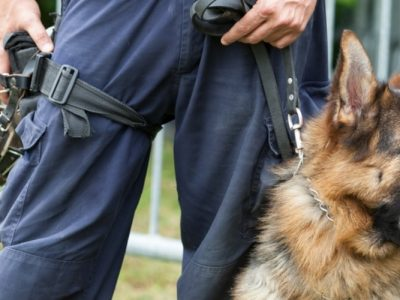Police dog saves partner's life after ambush attack in Mississippi woods